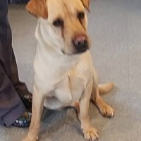 Adopt A Pet :: Poke - Marion, KY