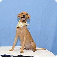 Adopt A Pet :: BAMBI - Poteau, OK