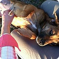 Adopt A Pet :: Francine- In CT - West Hartford, CT