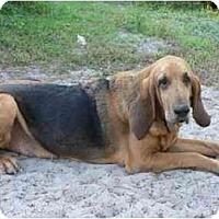 Adopt A Pet :: Walter - Carrollton, GA