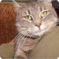 Adopt A Pet :: Minka - Morris, PA