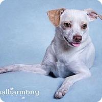 Adopt A Pet :: Tucker - Phoenix, AZ