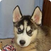 Adopt A Pet :: Hobi - Antioch, IL