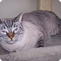 Adopt A Pet :: Eeyore - Colorado Springs, CO
