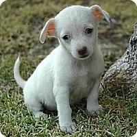 Adopt A Pet :: Bernadette - La Habra Heights, CA