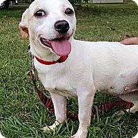Adopt A Pet :: Ricki - Somers, CT