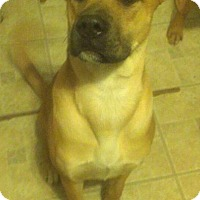 Adopt A Pet :: Bonnie Parker - Bedminster, NJ