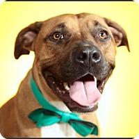 Adopt A Pet :: River - Los Angeles, CA