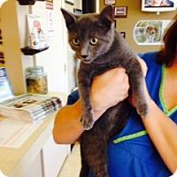 Adopt A Pet :: Kahari - Troy, OH