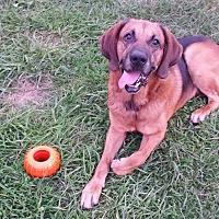 Bloodhound Mix Dog for adoption in Creedmoor, North Carolina - Clyde