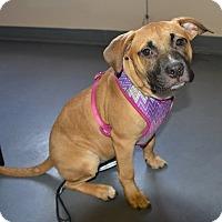 Adopt A Pet :: Claudia - Meridian, ID