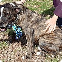Adopt A Pet :: Jacob(L)(85 lb) New Pics/Video - Niagara Falls, NY