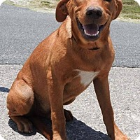 Adopt A Pet :: Billy - Gainesville, FL