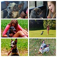 Adopt A Pet :: Joey & Bindi - Hollis, ME