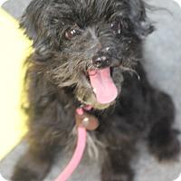 Adopt A Pet :: Treena - Fort Atkinson, WI
