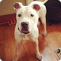 Adopt A Pet :: Coconut - Memphis, TN