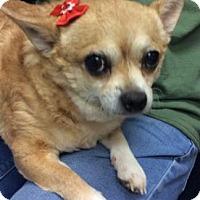 Adopt A Pet :: Bella - Centerville, GA