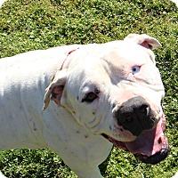 Adopt A Pet :: Charlie - Norwood, GA