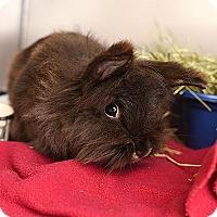 Adopt A Pet :: Pixie - Kanab, UT