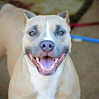 Adopt A Pet :: Roxy - Tomball, TX