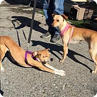 Adopt A Pet :: Eloise - Fallbrook, CA