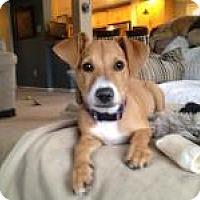 Adopt A Pet :: Baby Lola - Marlton, NJ