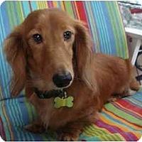 Adopt A Pet :: Harry Potter - San Jose, CA