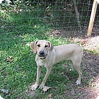 Adopt A Pet :: Sandy - Batson, TX