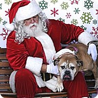 Adopt A Pet :: Maybell - Gilbert, AZ