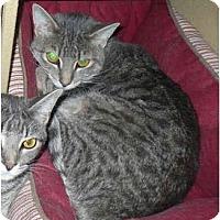 Adopt A Pet :: Wendy - Colmar, PA