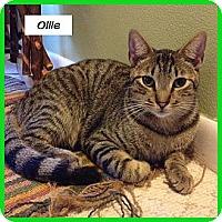 Adopt A Pet :: Ollie - Miami, FL