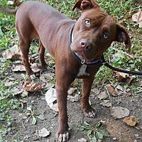Adopt A Pet :: Prissy/jackie - White Bluff, TN