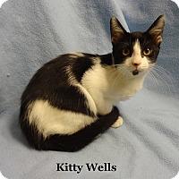 Adopt A Pet :: Kitty Wells - Bentonville, AR