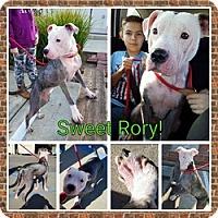 Adopt A Pet :: Rory - Sacramento, CA