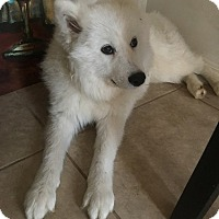 Adopt A Pet :: ELSA - Mission Viejo, CA