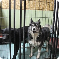Adopt A Pet :: Rainy - North Pole, AK