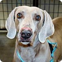 Adopt A Pet :: Baby Boy - Sun Valley, CA
