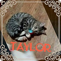 Adopt A Pet :: Taylor - Youngstown, OH