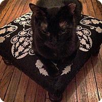 Adopt A Pet :: Figaro - Toronto, ON