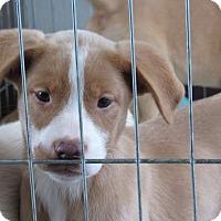 Adopt A Pet :: Maggie aka Duck - Broken Arrow, OK