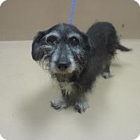 Adopt A Pet :: Friend - Reno, NV