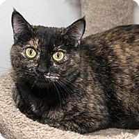Adopt A Pet :: Bubbles - Oakland, CA