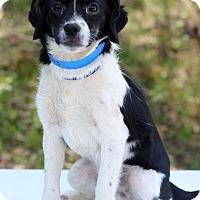 Adopt A Pet :: Denmark - Waldorf, MD