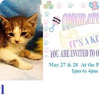 Adopt A Pet :: Daryl - Northfield, OH