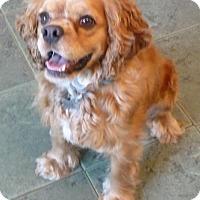 Adopt A Pet :: CASEY - Cranford, NJ