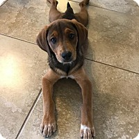 Adopt A Pet :: Tessie - Royal Palm Beach, FL
