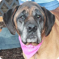 Adopt A Pet :: Maddie - Garfield Heights, OH