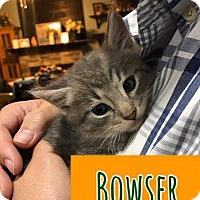 Adopt A Pet :: Bowser - Leonardtown, MD