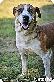 Hound (Unknown Type) Mix Dog for adoption in Jackson, Mississippi - Pricilla