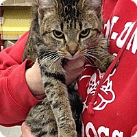 Adopt A Pet :: Lilly - Troy, OH